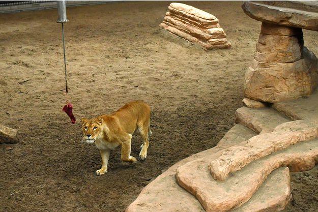 Tourisme Tourisme Paris s'engage à interdire les cirques avec des animaux sauvages